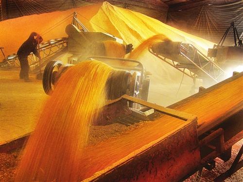 <b>去年收粮首破7000亿斤,节粮减损有成效!</b>