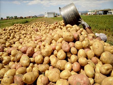 <b>2015年马铃薯(土豆)的本命年</b>
