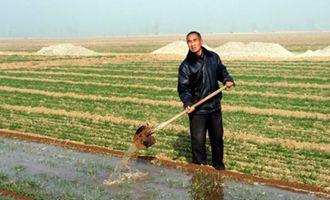 冬季小麦灌溉需要注意什么要点?