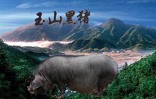 江西优良品种:玉山黑猪