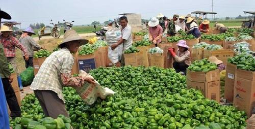 海南:8家农企上市,品牌农产品年入40亿!
