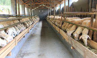 羊舍冬季养殖容易发生哪些疾病?