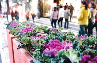2015年值得种植的名特蔬菜品种