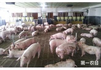 河南育肥猪中央财政承担50%的保费补贴