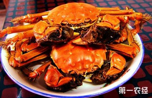 上海特产:崇明老毛蟹