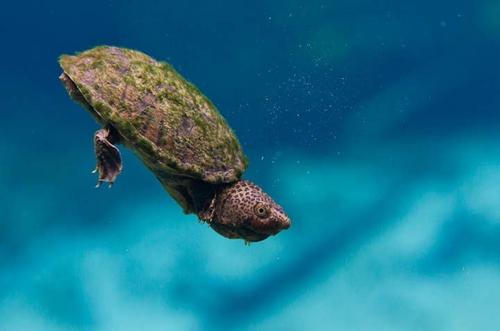 看看蛋龟身上的MOSS就知道环境的质量了