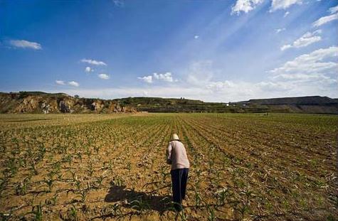 上海酝酿农地经营权抵押贷款试点 农地将可入市
