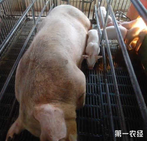 D 驱虫模式灭猪寄生虫妥妥的图片