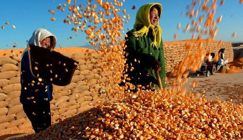 <b>粮食年年增产 农业科技贡献率达56%</b>