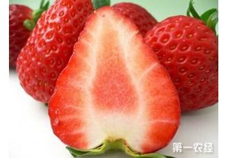北京特产之昌平草莓