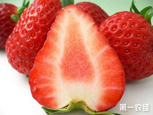 北京特产--昌平草莓
