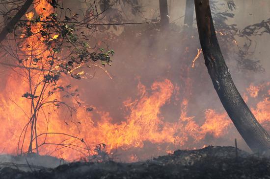 兰州20多亩竹柳树苗被烧毁