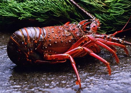 冬季海捕 加拿大龙虾揭秘20150130