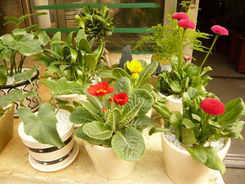 广东惠州:小盆栽花卉销量好,花卉电商寻找新出路