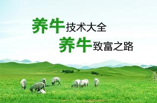 【养牛专题】养牛技术大全 养牛利润成本分析