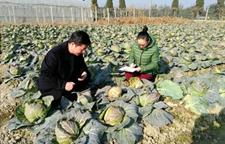 浙江杭州春节前抓紧蔬菜安全检测