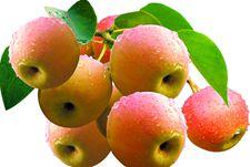 南果梨如何种植?