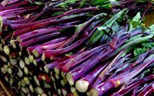 湖北特产:洪山紫菜苔