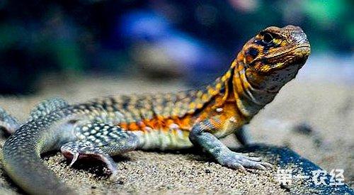 动物 蜥 蜥蜴 500