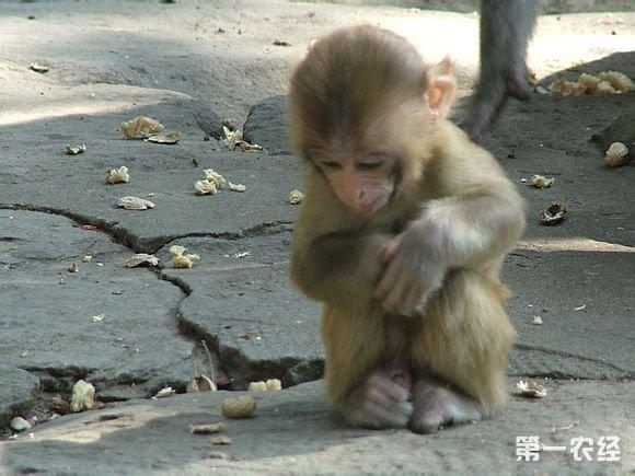 记者查阅了《濒危野生动植物种国际贸易公约》发现