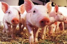 2015年养殖类项目申报补贴时间与条件