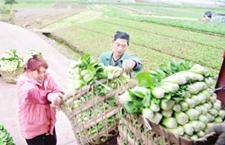 四川武胜产业基地现代农业助民增收