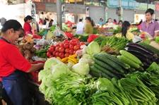 海南海口冬季瓜菜发往全国各地