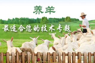 【养羊专题】养羊技术 养羊成本利润分析