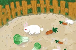 【养兔专题】养兔技术大全 兔子养殖前景