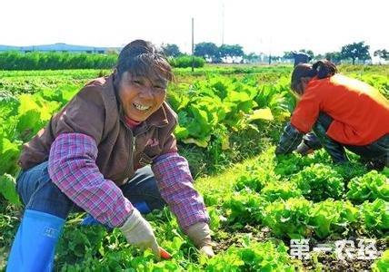土地种菜新手步骤图
