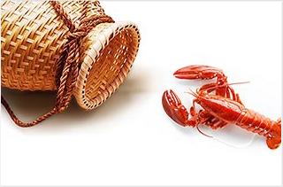 【养虾专题】养虾技术 养虾赚钱致富