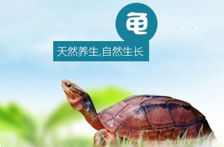 【养龟专题】养龟技术 家庭如何养龟?