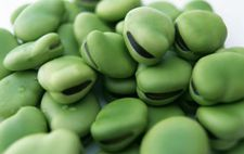 青绿甜脆蚕豆如何出高产?