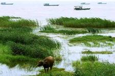 安徽合肥环巢湖生态渔业改造升级