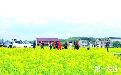 湖南长康镇产业结构调整