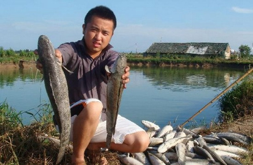 鱼塘养殖技术大全
