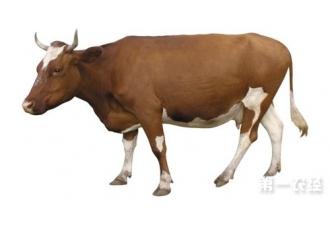 黄牛养殖技术大全