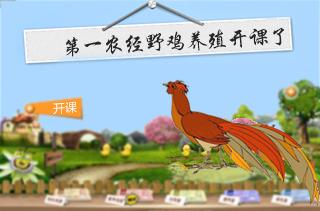 野鸡/山鸡养殖技术|视频|养殖成本