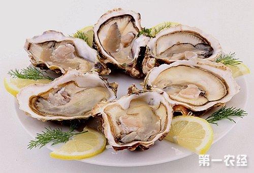 大牡蛎的图片大全