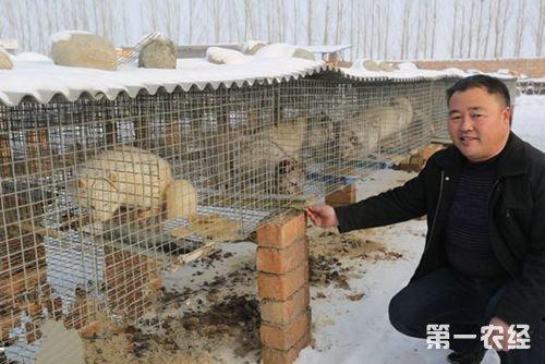 田志红和他的狐狸