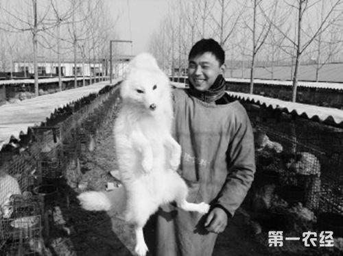 菏泽狐狸养殖