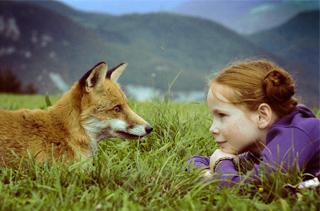 狐狸养殖技术与疾病防治 手把手教你养狐狸