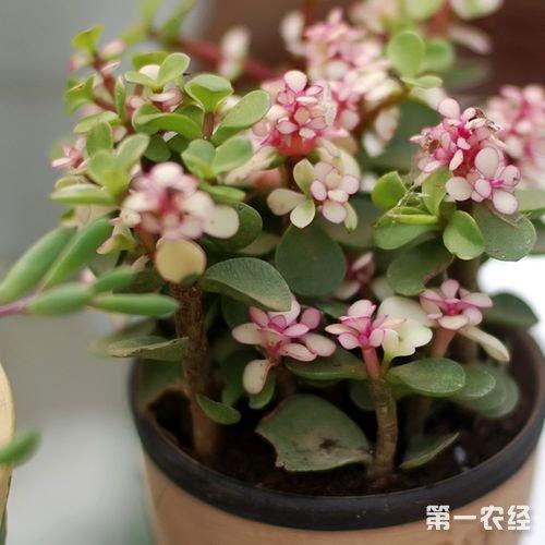 剪植物花的步骤图片大全