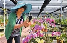 春季百业繁忙 果蔬花卉竟绽放