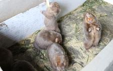 四川宜宾江安县建成川南最大的竹鼠繁殖基地