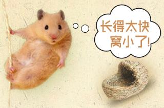 竹鼠养殖技术与前景分析 竹鼠致富攻略|视频