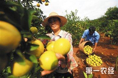 """海南:品牌农业的""""澄迈样本"""""""