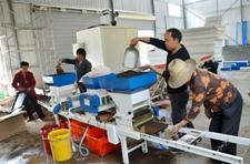 湖北竹山县:水稻规模种植 机播如有神助