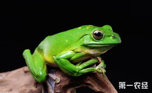 青蛙受到创伤、中毒防治方法简介