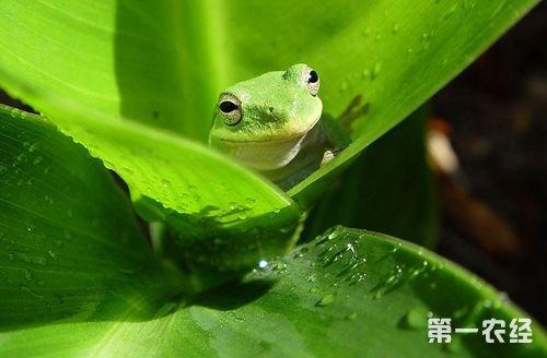 青蛙的常见病害有哪些?